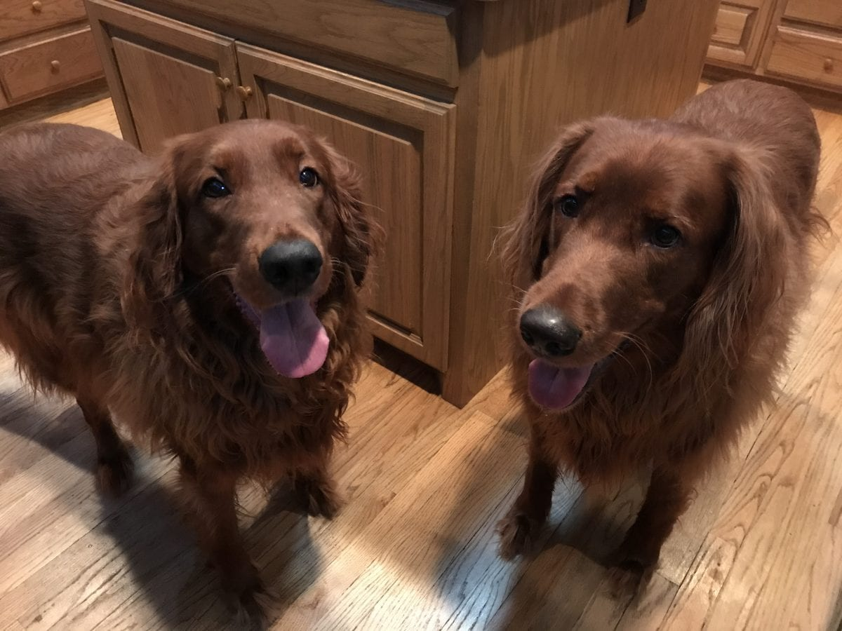 The Golden-Irish Boys--Cooper (L) and Aiden (R)
